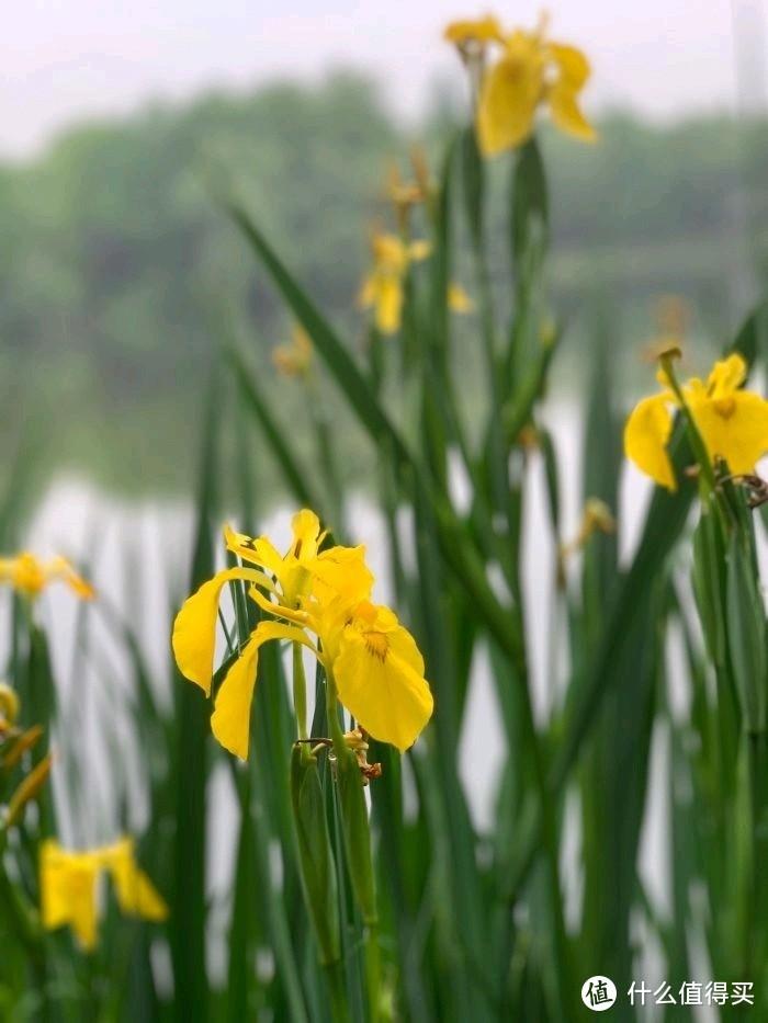 良渚君澜亲子游----亮点有,却也槽点满满的春游