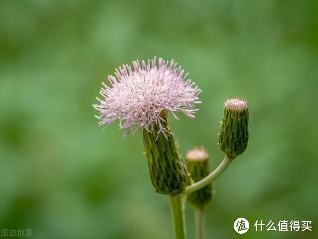 小时候经常见的17种植物,很熟悉却叫不上名字,现在终于知道了