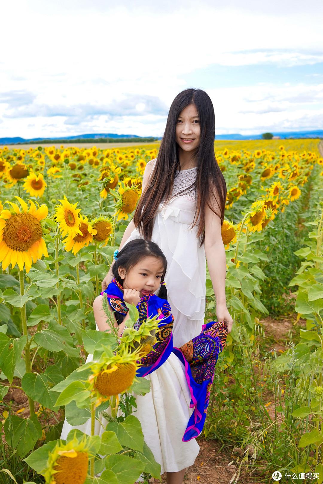 梵高和薰衣草向日葵,回忆南法之行