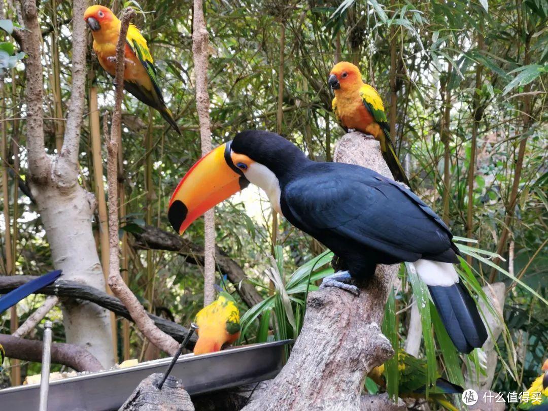 广州长隆野生动物世界为什么是国内最好的野生动物园?一文带你遍览世界珍奇动物