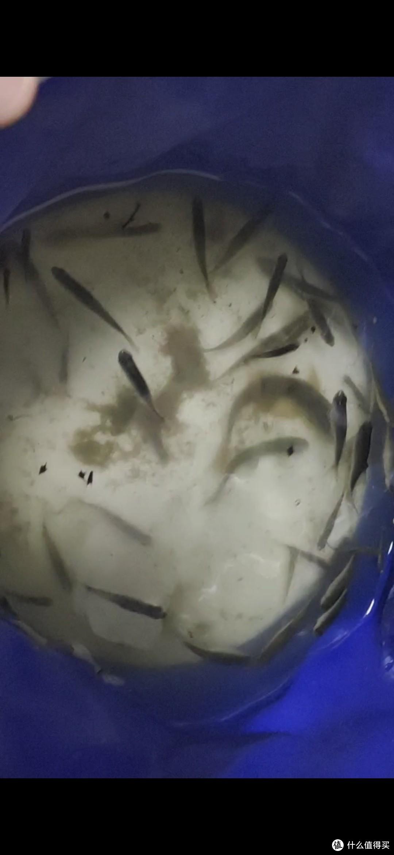 今年买小龙虾,竟然帮处理内脏