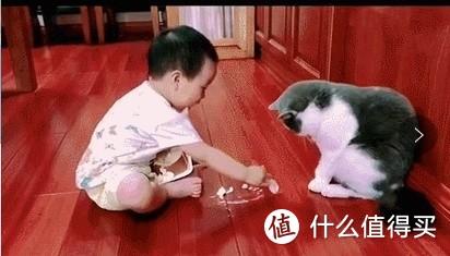 猫饭自制指南,家长必备!