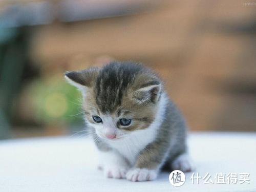 为什么都说给猫咪喝羊奶粉好?猫奶粉什么牌子好?