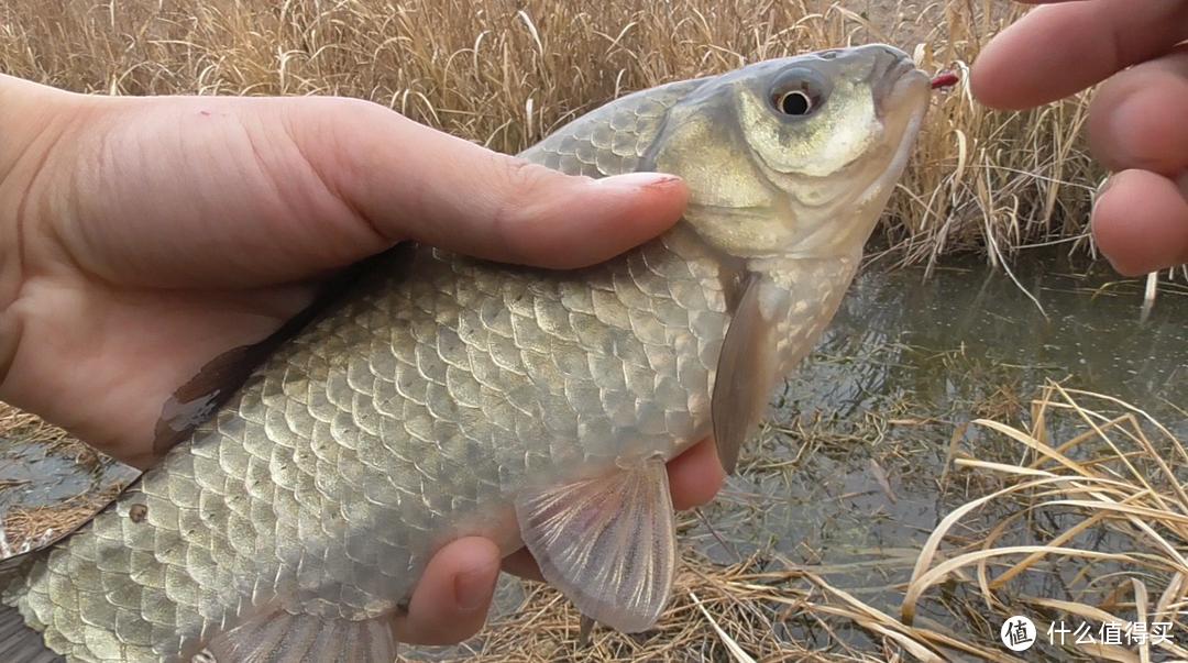 """打窝一会儿鱼就散了,不如在窝料里加点""""土"""",有效提升聚鱼效果"""