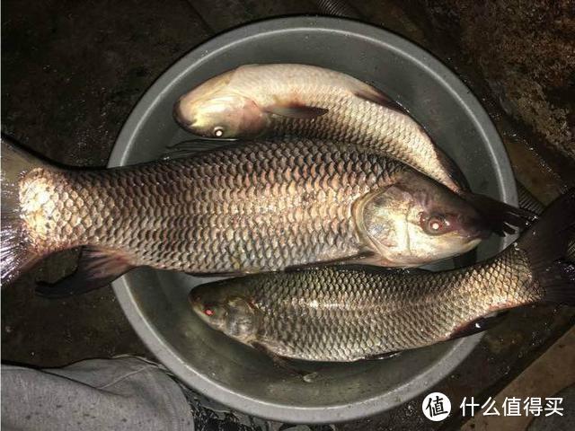 野塘里连钓3条鱼,不知是青鱼还是草鱼,已下锅,求钓鱼人鉴定