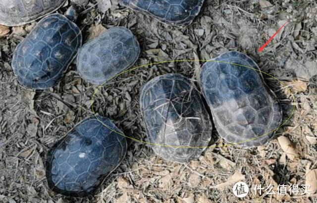 """浙江男子钓鱼路上发现""""山乌龟"""",一口气捡了半桶,网友:该奖励"""