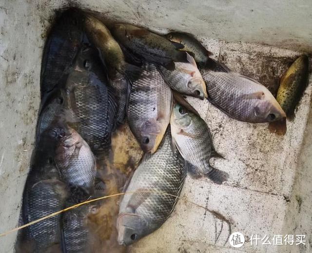 大雨后,广东一街道大鱼乱窜,当地人:鱼太多,抓不过来
