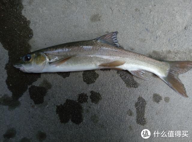 这种鱼长1斤需要10年,因美味被吃成保护动物