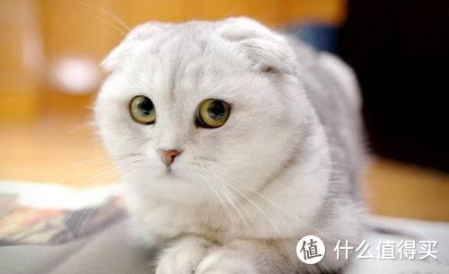 猫咪营养膏真的有必要买么?