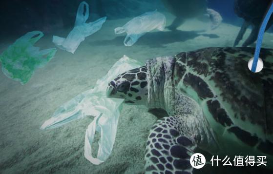 碧然德:拯救海洋,你我在行动