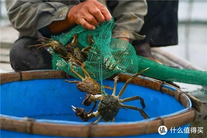 去阳澄湖吃大闸蟹哪家好 美景美食一样好
