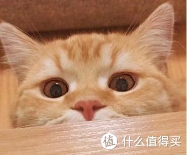 幼猫猫粮哪款好?避免智商税