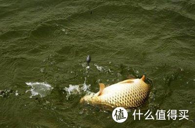打窝的这些方法,钓鱼人最好能掌握
