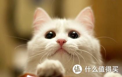 各阶段的幼猫应该怎么吃幼猫猫粮?