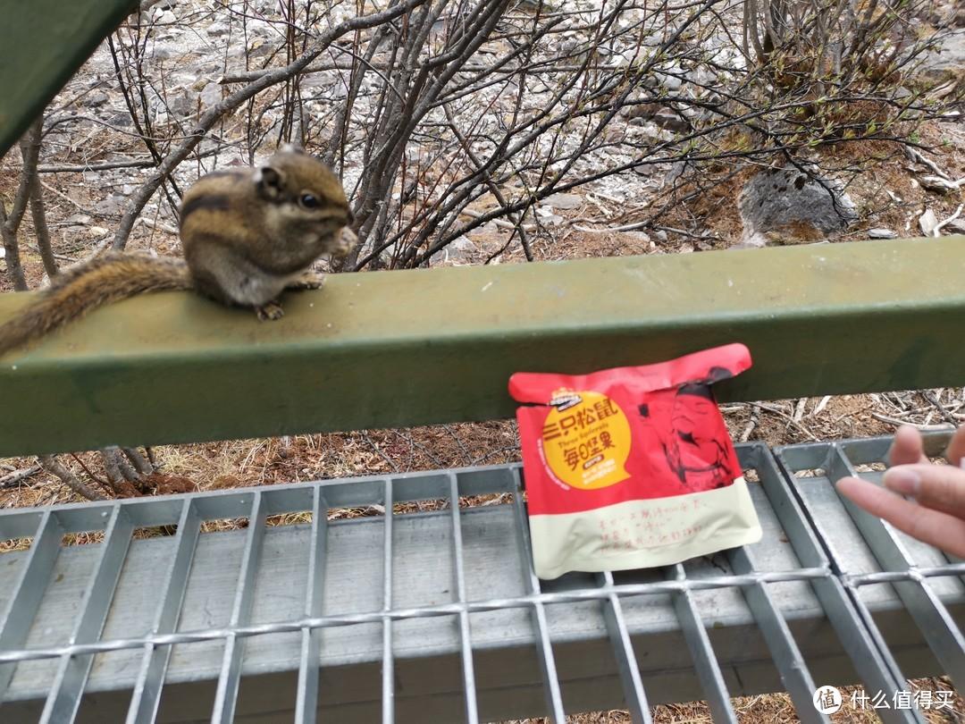 用三只松鼠喂小松鼠