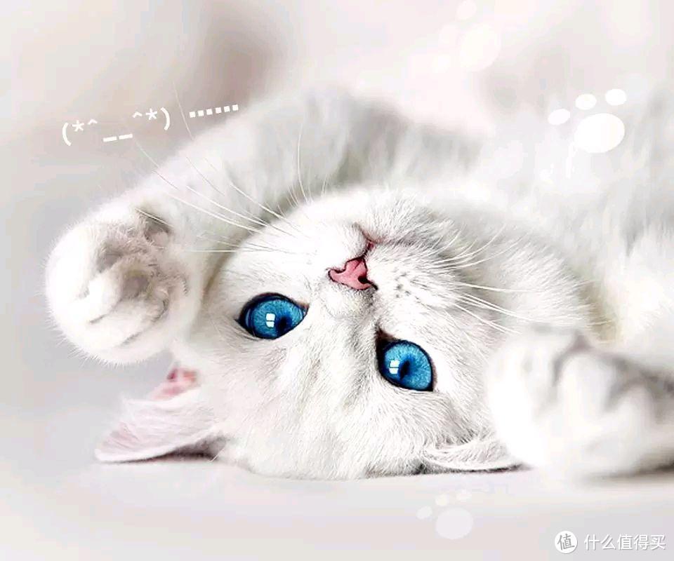 """给猫咪喝羊奶粉有什么好处?小""""奶""""猫就是要喝奶嘛"""