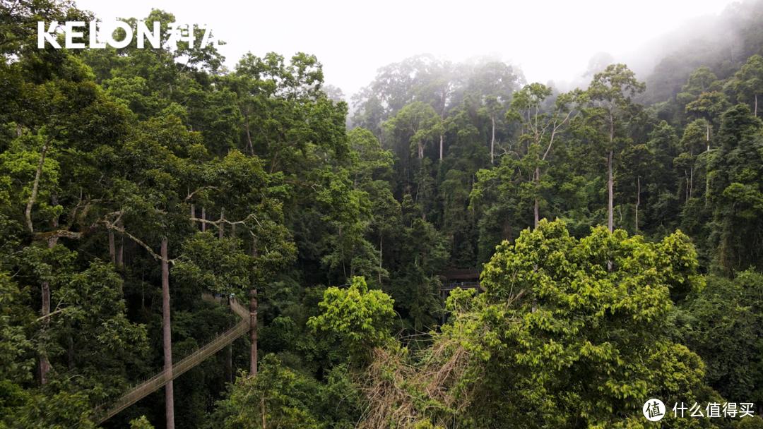 泼水节都拦不住的一小时除湿4升水?科龙空调奔赴西双版纳腹地的热带雨林 挑战极限除