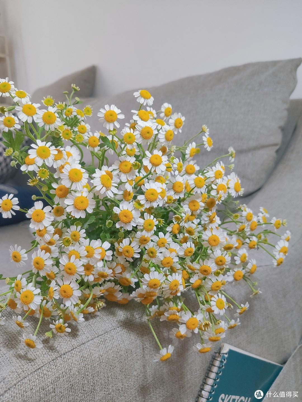 分享好看的花花,推荐品种(01)