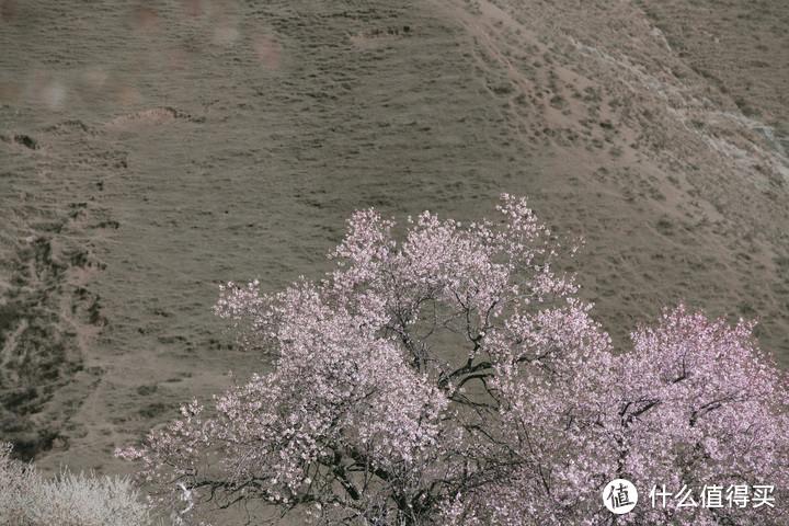 两人一狗的蜜月旅行——20天川滇藏青甘大环线超详细自驾攻略(中)