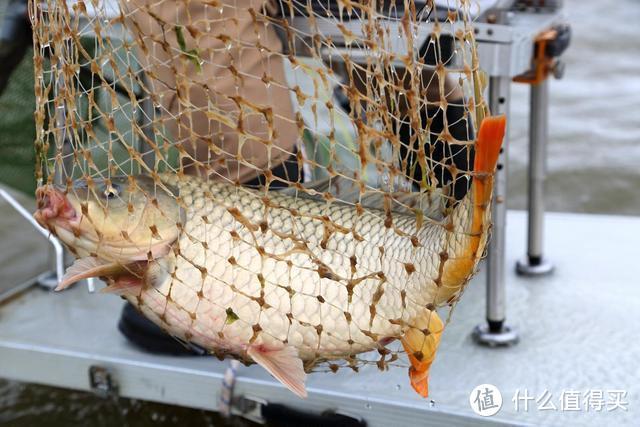 外出钓鱼,选对饵料很关键,味型不对努力白费