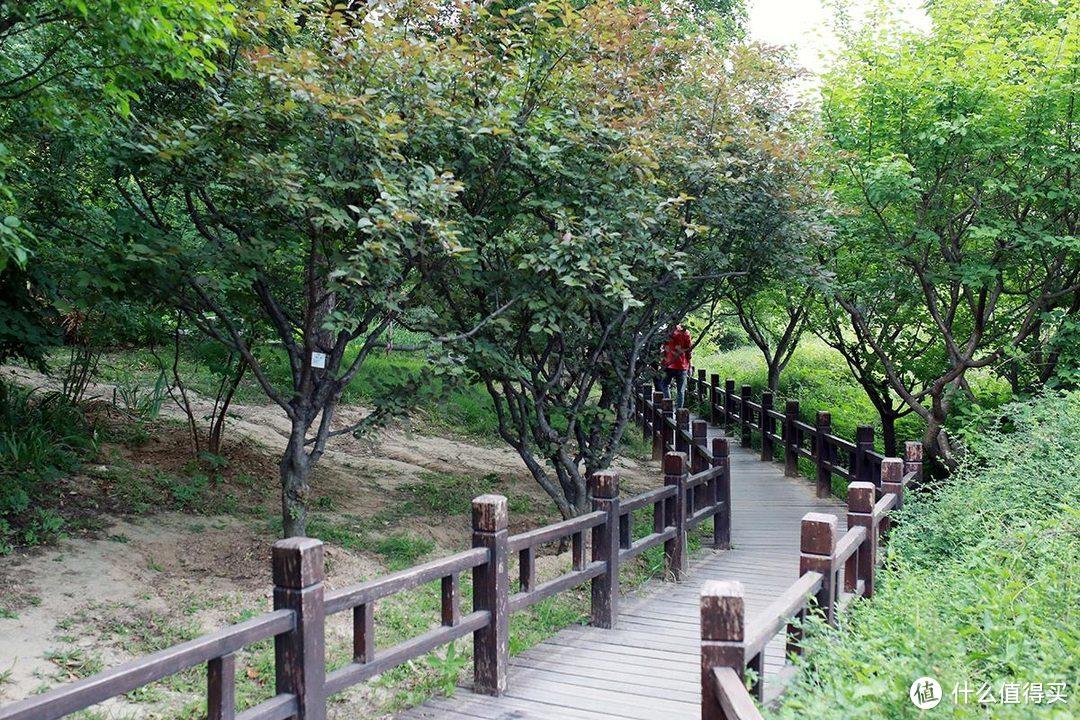 避暑新选择,植物园还是你喜欢的那个样子么?