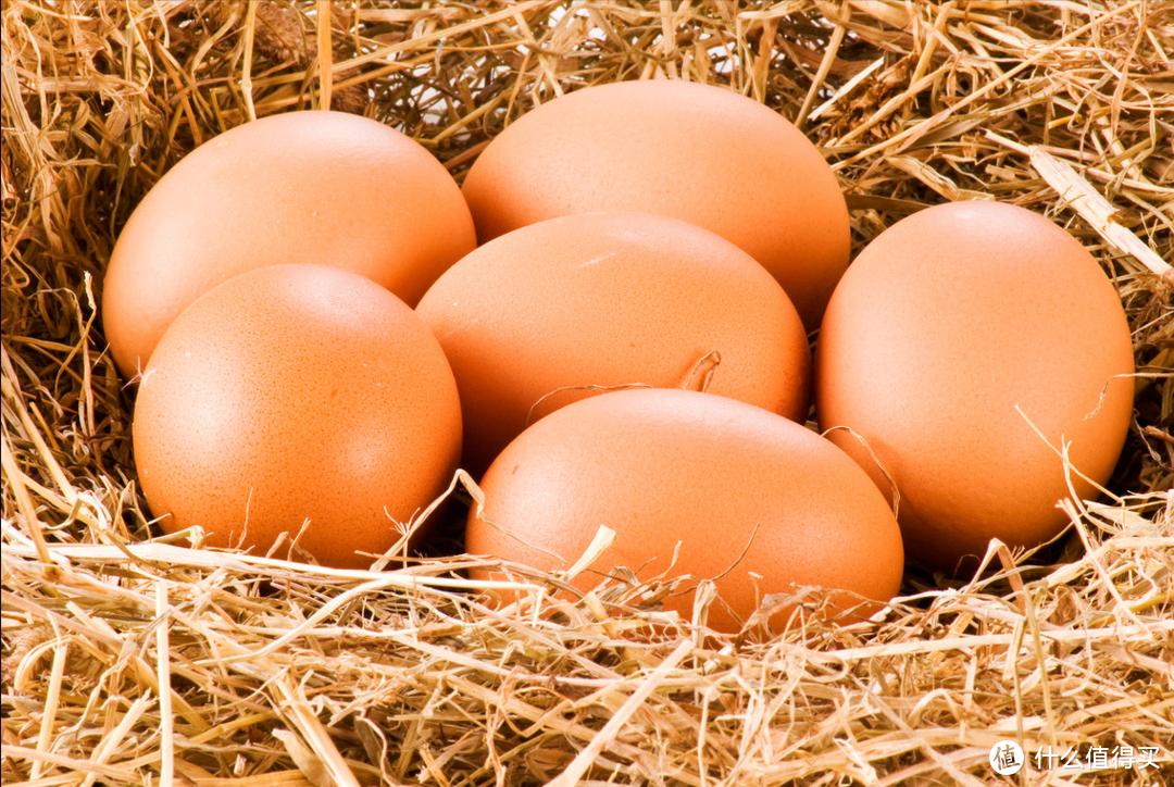 买鸡蛋时,遇到红皮和白皮选哪个?搞清楚其中的区别,别再买贵了