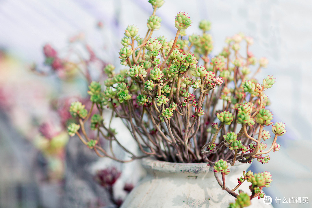 不要被植物PUA,办公桌面最适合照顾的几种植物