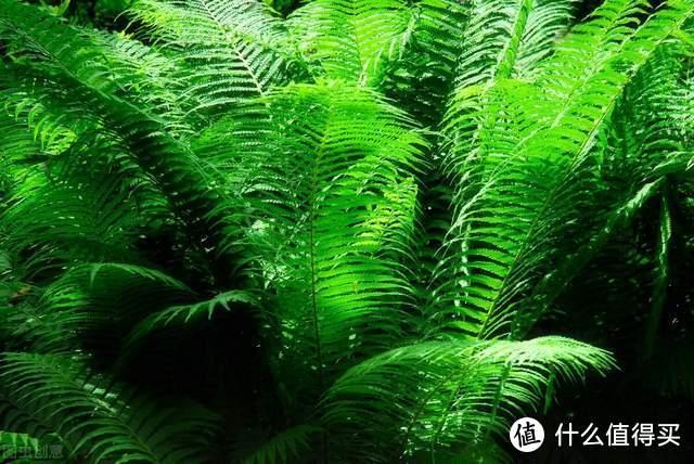 一本书,改变我对植物学的认知,人类生存依赖着植物