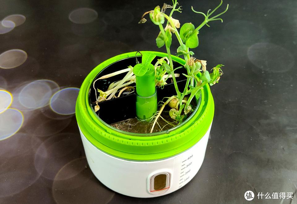亲子互动趣味体验,科学罐头孟德尔植物培育舱