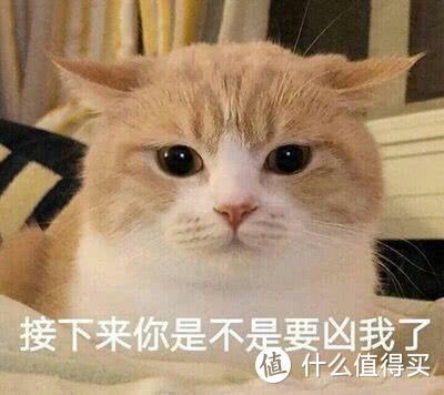 """高阶撸猫教程— """"望闻问切""""版撸猫 双向治愈性操作"""