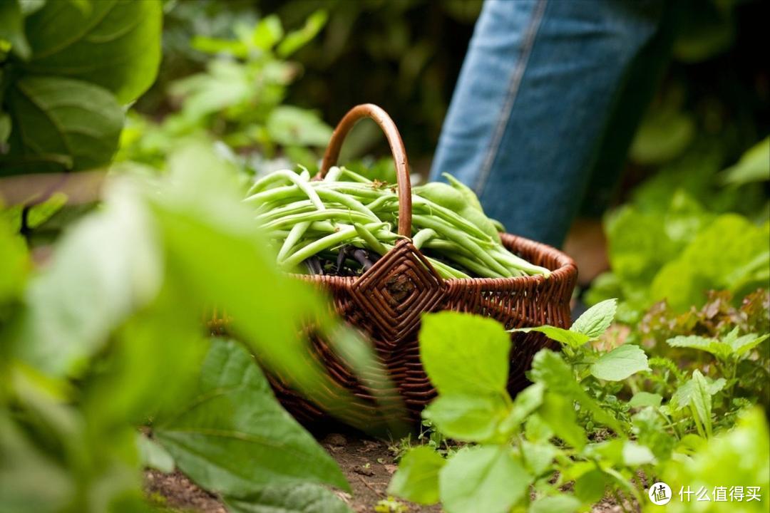 容易引发食物中毒的5种夏季蔬菜,最后1种最容易被忽略,你家有吗
