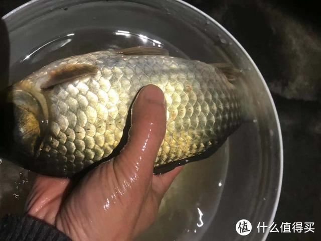 玉米这样用,让钓鱼效果翻倍,鲫鱼鲤鱼草鱼鳊鱼都爱吃,别错过