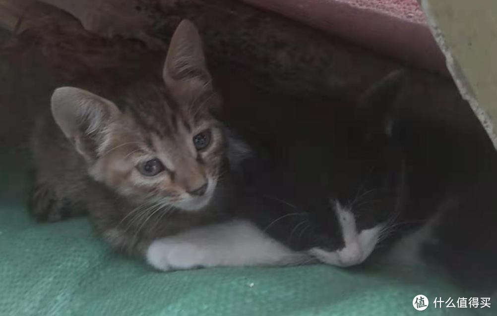 幼猫猫粮推荐!几个月的小猫咪应该怎么喂?