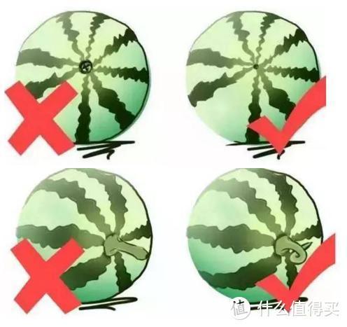 「收藏防身」记住口诀,选西瓜一挑一个准!教大家挑出爆甜西瓜,还愣着干啥快收藏啊~