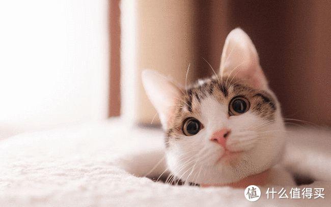 猫咪保持高颜值的秘诀,猫咪卵磷脂美毛护肤作用多