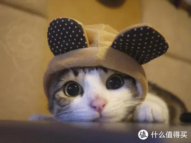 养宠课堂:猫咪羊奶粉的好处有什么?各个阶段的猫咪都能喝!