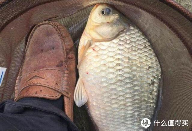 钓鱼技巧:鱼口轻不能全怪鱼,这4个方面都有关系,钓鱼前弄清楚