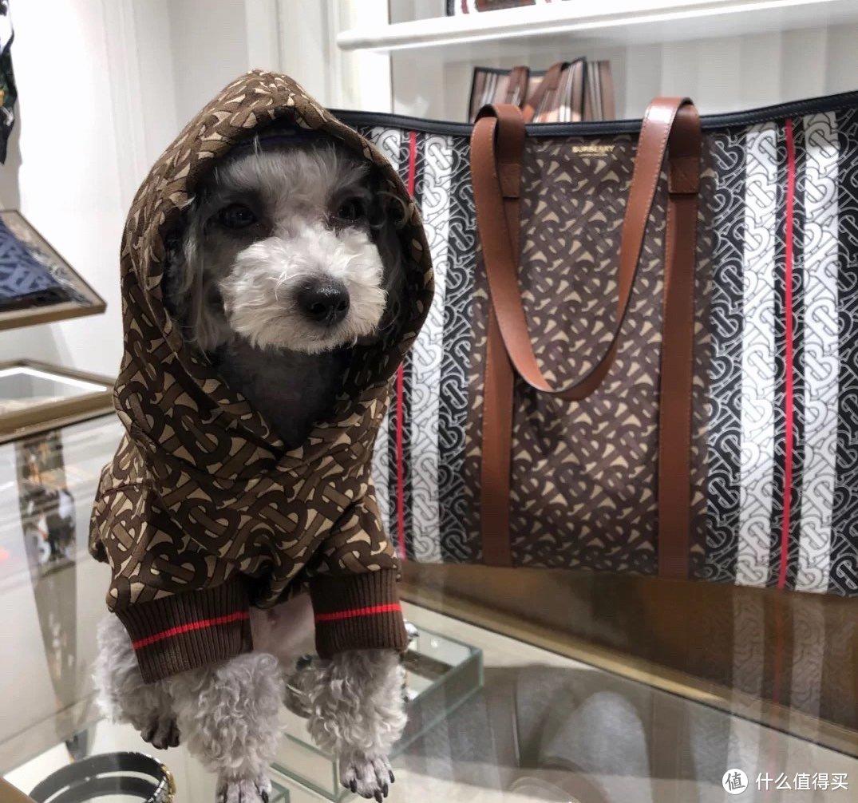 """BURBERRY、Supreme、狗牙包跟宠物也有关?破圈时尚联""""萌"""",给宠物打扮你愿意花多少钱?"""