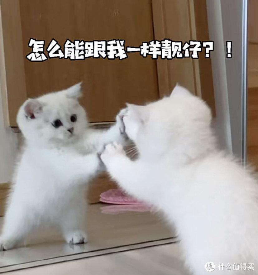 猫卵磷脂的功效与作用,猫吃卵磷脂还是蛋黄?