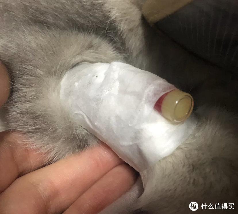 猫吐毛球怎么解决,化毛球片可以治疗猫毛球症
