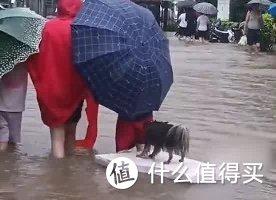 河南突降暴雨,这样救助动物 ——【暴雨救宠指南】