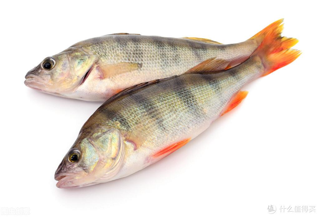 买鲈鱼,不是越大越好,记住避开三种鲈鱼,弄懂了再买别被忽悠