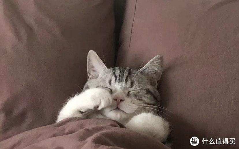 猫营养膏是不是补脑子啊,猫咪营养膏作用这么强?