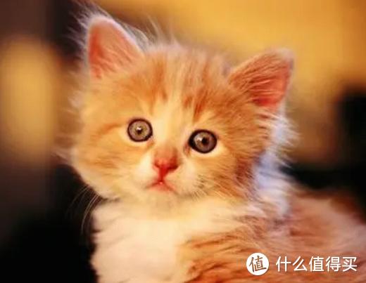 国产猫粮什么牌子好而不贵?合适的才是最好的!