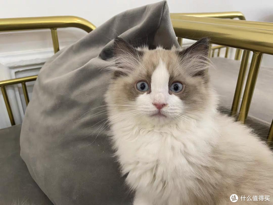 猫拉屎特别臭怎么回事?跟猫粮有关吗