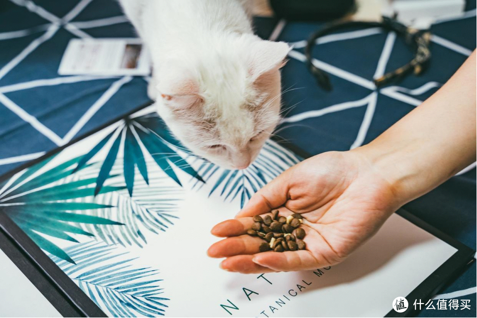 守护猫咪的玻璃胃,买猫粮还得看成分!三只小宠猫粮试吃体验