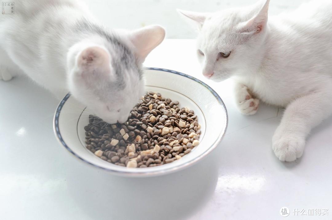 国产猫粮测评:挑嘴软便猫如何换粮?三只小宠猫粮体验