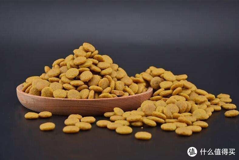 你知道怎么挑选适合主子的猫粮吗?
