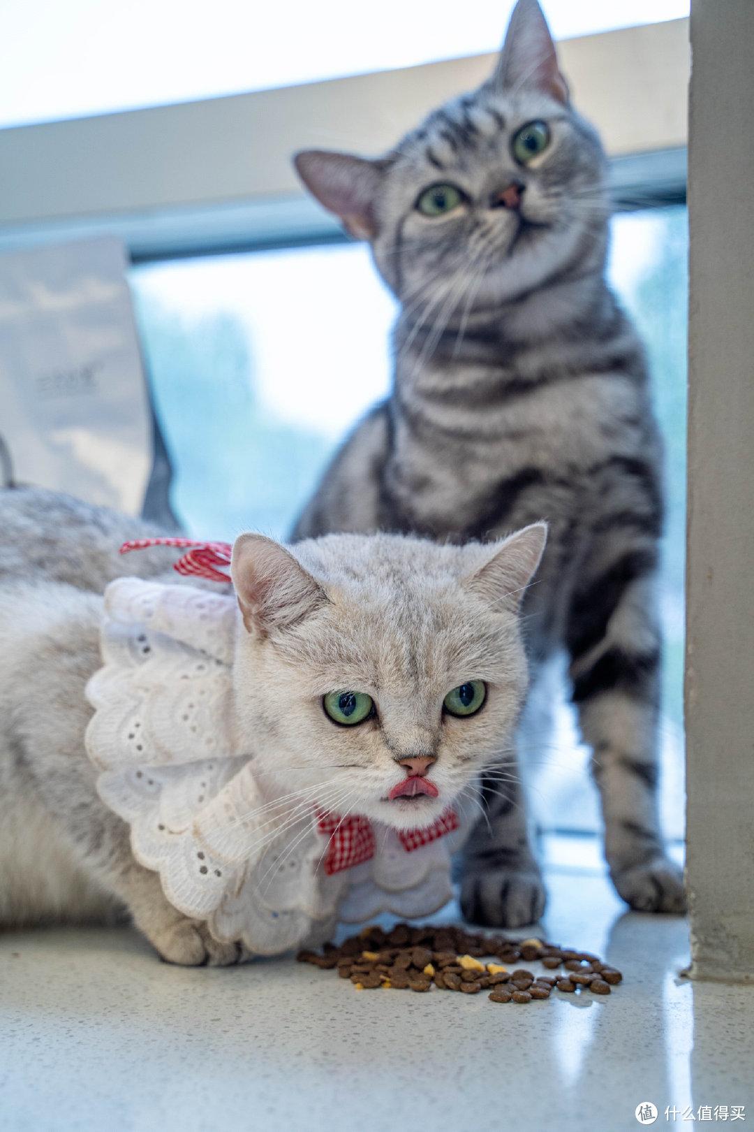 给脯乳期神兽更好的选择 三只小宠猫粮测评