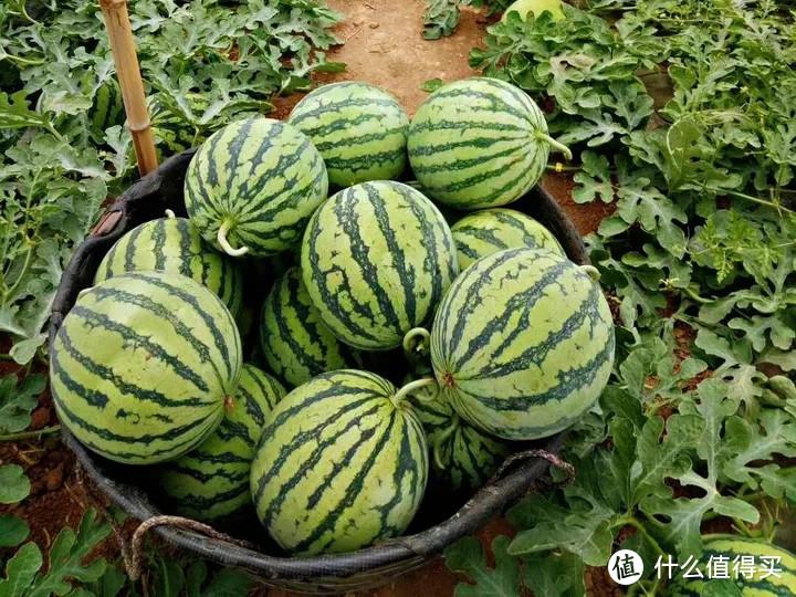 夏天买西瓜,记住南方的3个品种,北方的3个品种,不用挑都是好瓜
